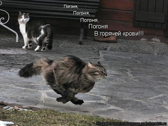 kotomatritsa_fg (700x524, 308Kb)