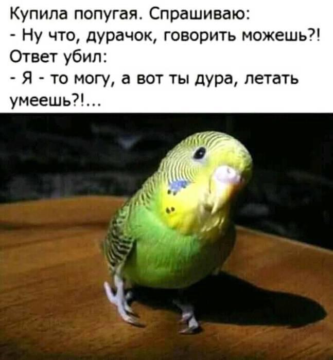 http://img0.liveinternet.ru/images/attach/d/2/149/841/149841666_65650543_2428249500739163_3651666102267674624_n.jpg