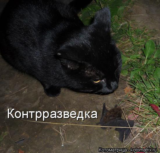 kotomatritsa_8I (550x525, 177Kb)