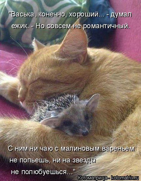 kotomatritsa_K (471x604, 233Kb)