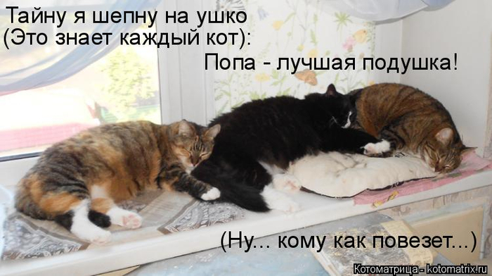 kotomatritsa_V (700x392, 242Kb)