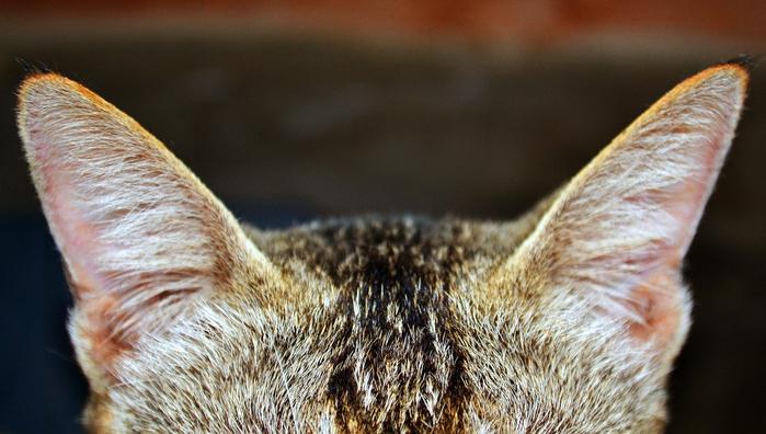 cat-3632720_1280 (700x396, 341Kb)