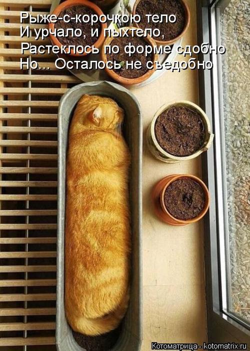 kotomatritsa_1X (500x700, 402Kb)