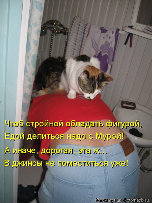kotomatritsa_b (524x700, 335Kb)