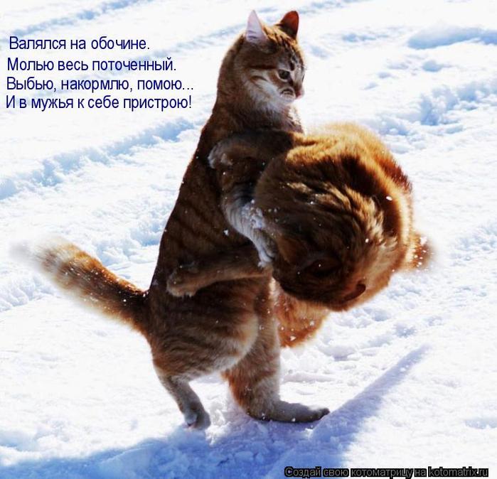 kotomatritsa_L (700x674, 416Kb)