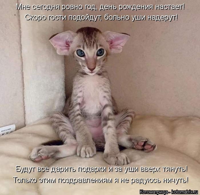 kotomatritsa_p (700x682, 250Kb)