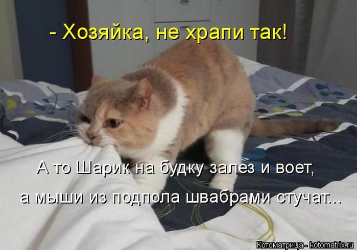kotomatritsa_q (2) (700x491, 249Kb)