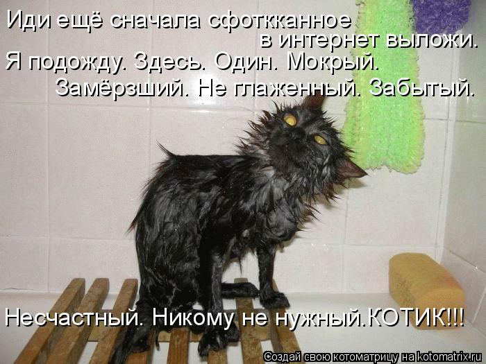 kotomatritsa_sl (700x525, 237Kb)