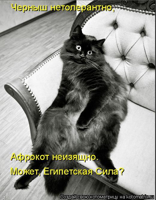 kotomatritsa_X (521x669, 197Kb)