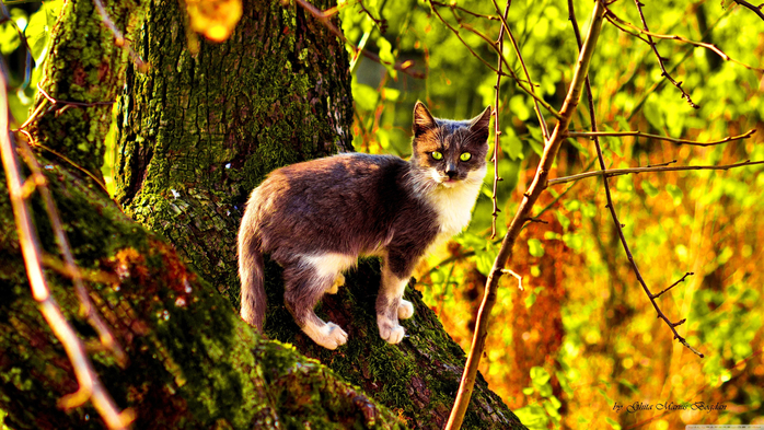 www.GetBg.net_Animals___Cats_Cat_on_a_tree_covered_with_moss_108699_ (700x393, 513Kb)