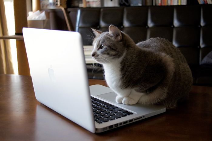 browsing_internet_cat_by_lowdope-d3bzspz (700x466, 284Kb)