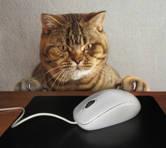 Creative_Cats_Mouse_computing_Snout_Glance_514027_2420x2160 (700x625, 490Kb)