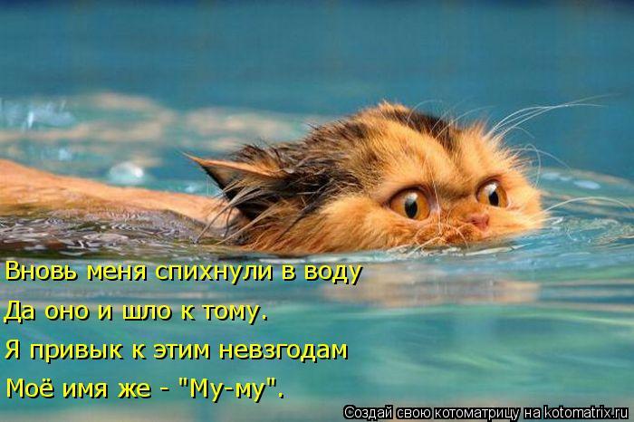 kotomatritsa__ (700x466, 268Kb)