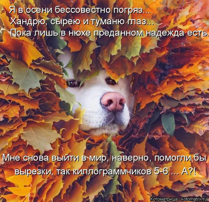 kotomatritsa_8R (700x675, 631Kb)