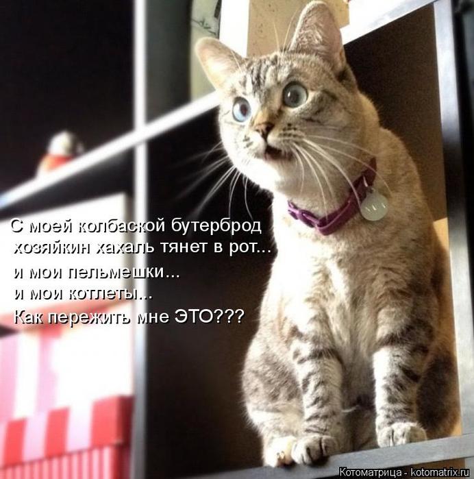 kotomatritsa_E (692x700, 358Kb)