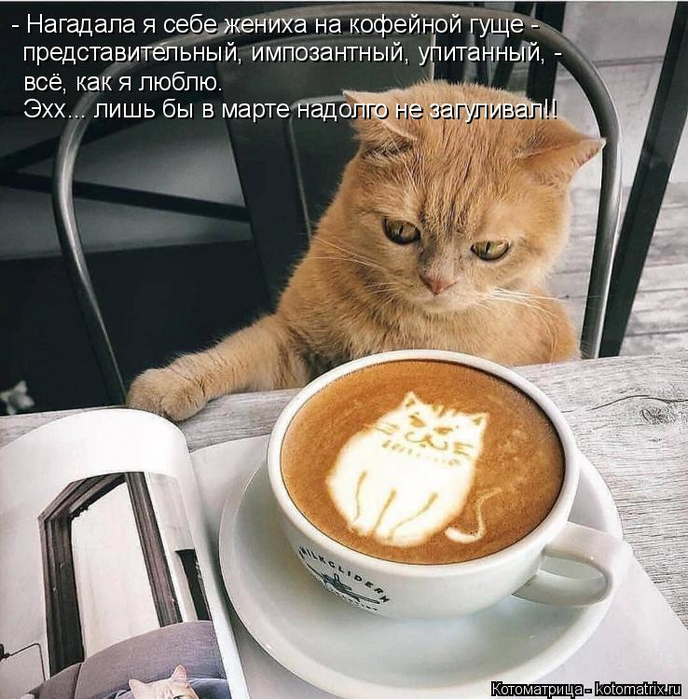 kotomatritsa_t (688x700, 421Kb)
