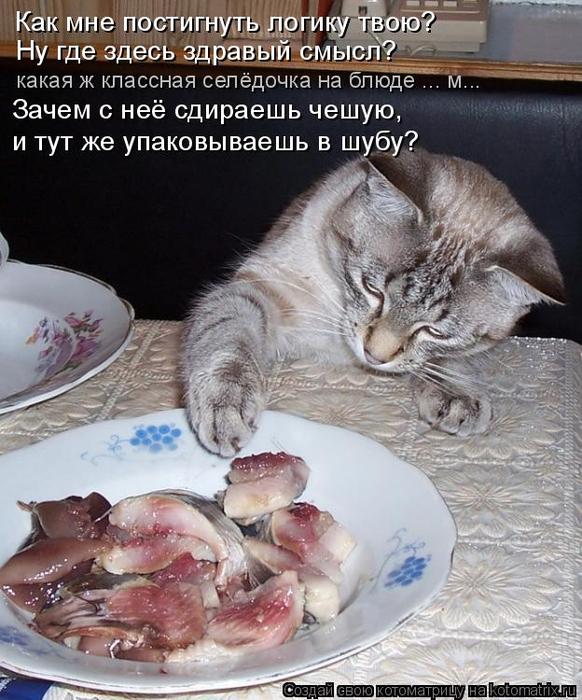 kotomatritsa_0 (582x700, 404Kb)