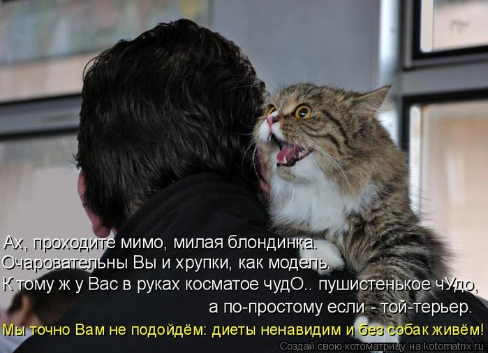 kotomatritsa_9P (700x505, 288Kb)