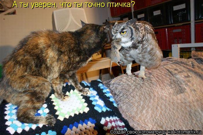 kotomatritsa_EC (700x466, 284Kb)