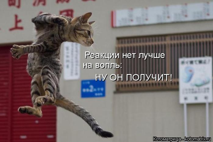 kotomatritsa_L (1) (700x468, 216Kb)