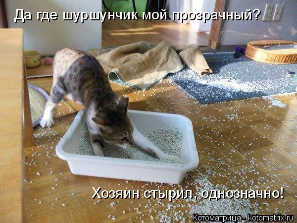 kotomatritsa_P (600x450, 249Kb)