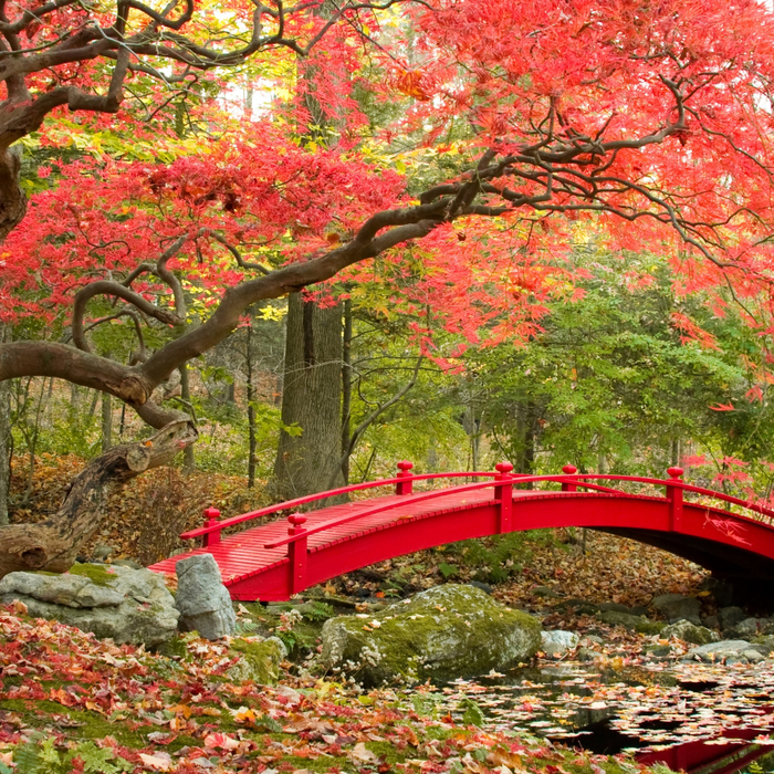 autumn-park-bridge-fall-1029 (700x700, 879Kb)