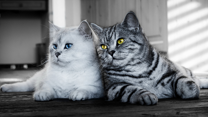 Cats_Two_Glance_441795_2048x1152 (700x393, 198Kb)