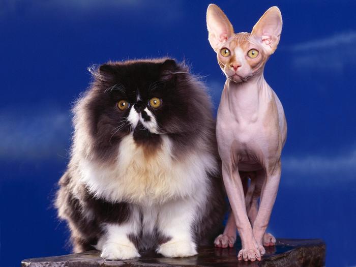 cats_058 (700x525, 318Kb)