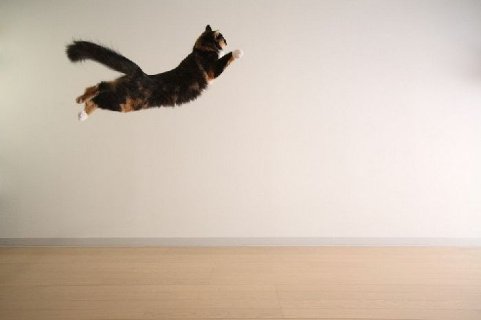 1297414274_flying_cats_21 (700x465, 64Kb)
