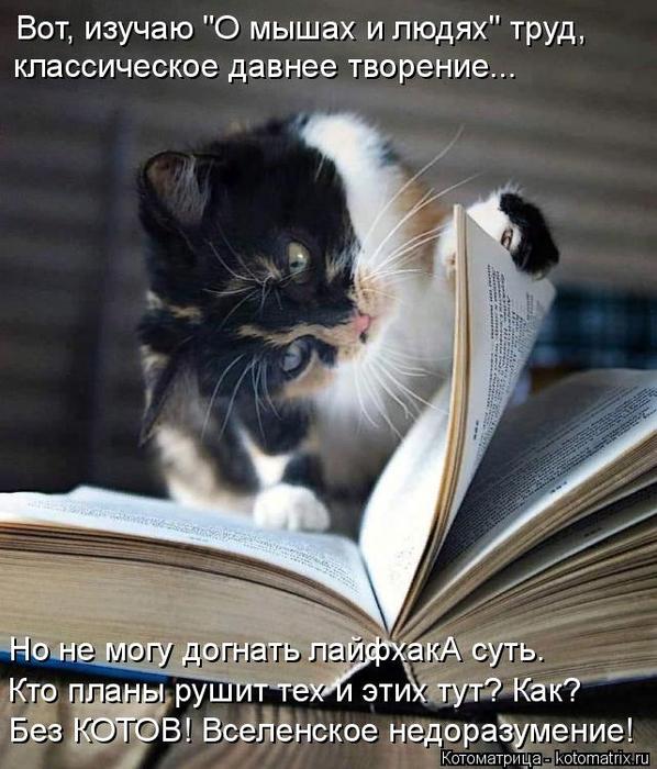 kotomatritsa_5 (598x700, 373Kb)