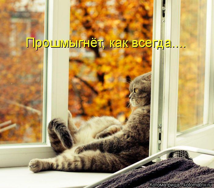 kotomatritsa_Dm (700x615, 320Kb)