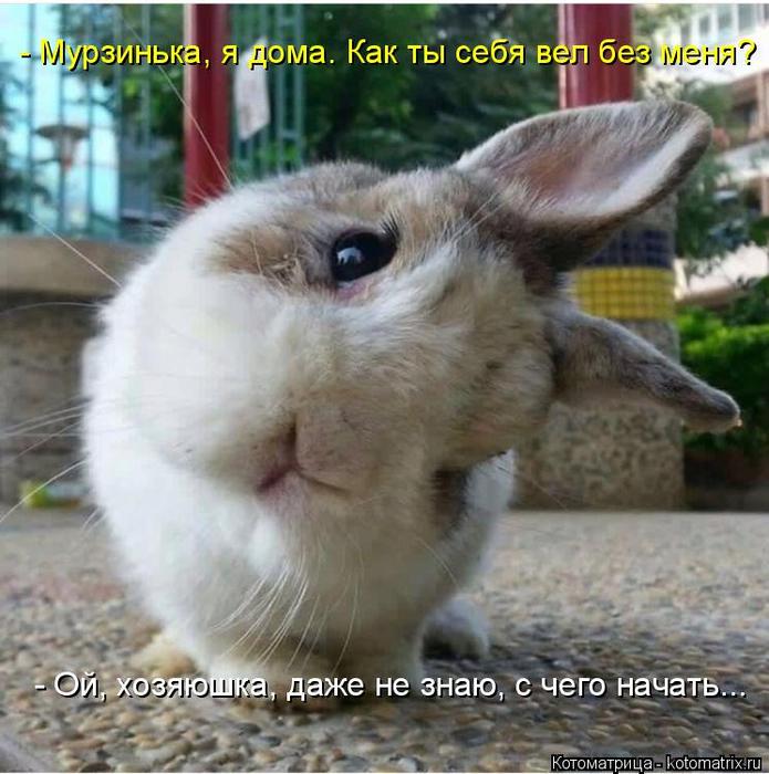 kotomatritsa_G (695x700, 431Kb)