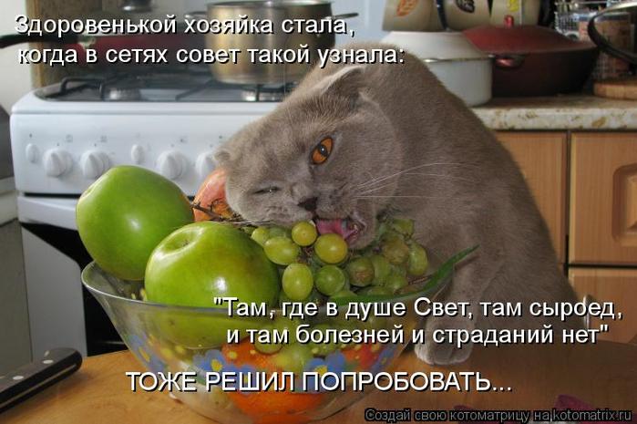 kotomatritsa_jc (700x465, 328Kb)