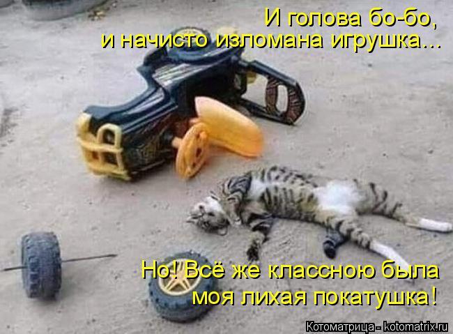 kotomatritsa_T (650x479, 213Kb)