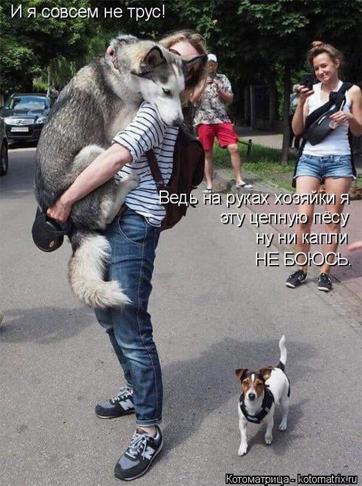 kotomatritsa_U (522x700, 376Kb)