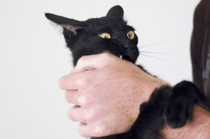 f08c4e1b57c4c9bec167b31f029f461f--pet-care-cat-stuff (700x465, 24Kb)