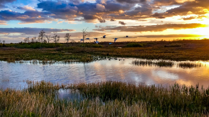 everglades-national-park_h (700x393, 358Kb)