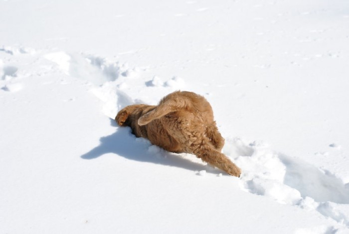zivotnoe-v-snegu-vpervie19 (700x469, 95Kb)