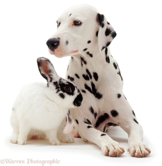cute-matching-pets-warren-photographic-3-57e934ee6caec__880 (679x700, 232Kb)