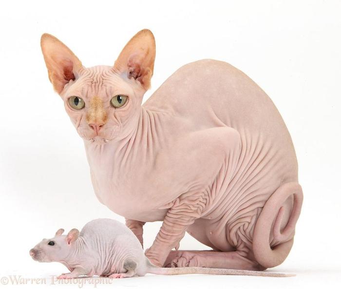 cute-matching-pets-warren-photographic-46-57e935588da34__880 (700x593, 220Kb)