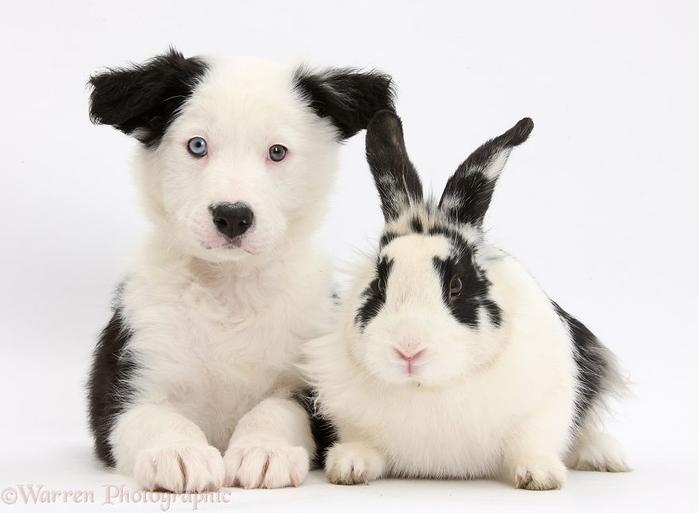 cute-matching-pets-warren-photographic-41-57e9354dbb856__880 (700x513, 175Kb)