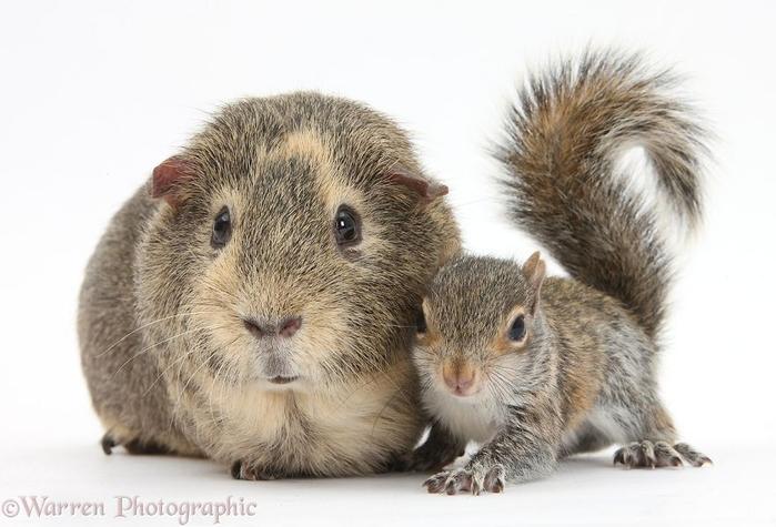 cute-matching-pets-warren-photographic-34-57e9353c7d583__880 (700x475, 240Kb)