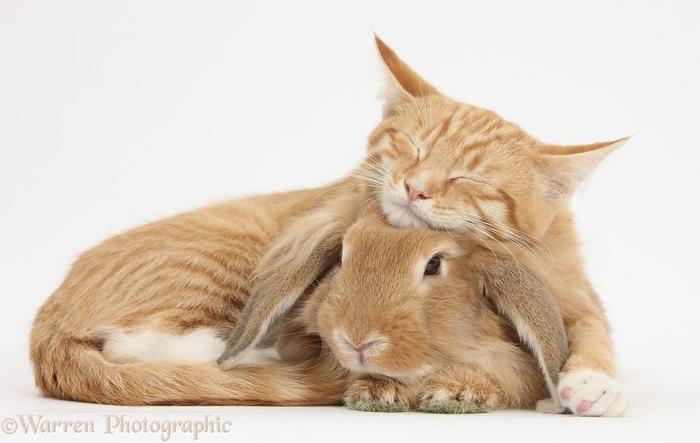 cute-matching-pets-warren-photographic-29-57e9352d79290__880 (700x443, 190Kb)