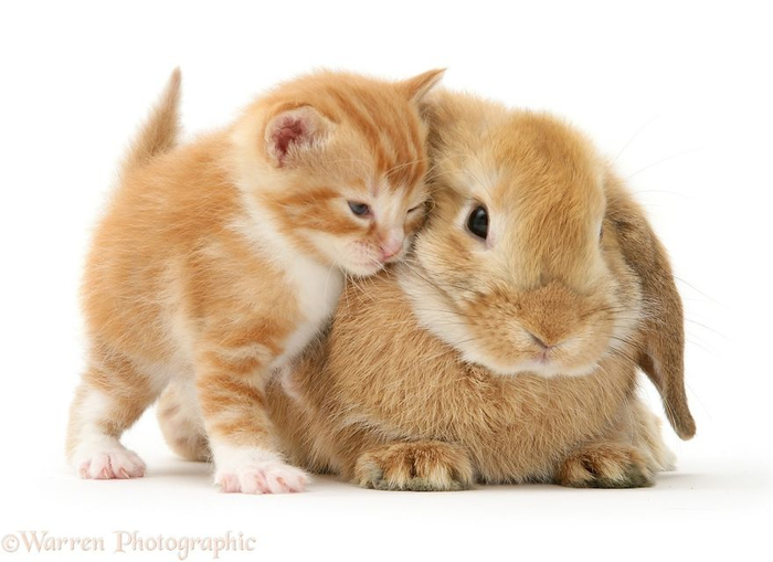 cute-matching-pets-warren-photographic-10-57e934fe311a0__880 (700x509, 230Kb)