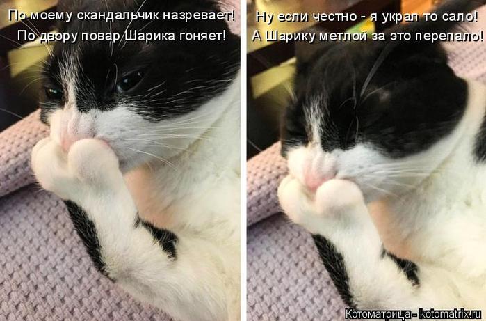 kotomatritsa_a (700x461, 283Kb)