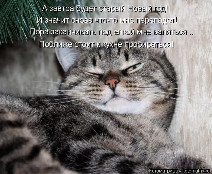 kotomatritsa_C (700x574, 363Kb)