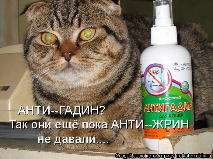 kotomatritsa_q (700x525, 308Kb)