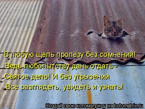 kotomatritsa_Vq (467x351, 175Kb)