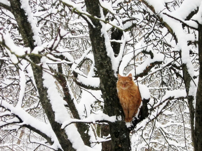 Котоматрица - 4 - Страница 18 151445434_snow2_2