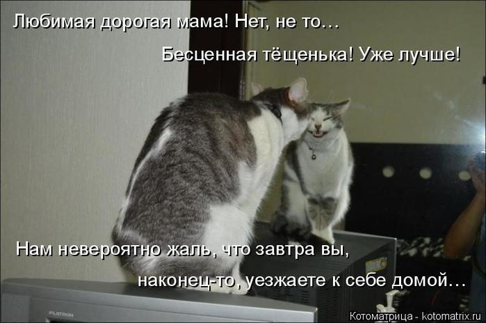 kotomatritsa_2 (700x464, 219Kb)